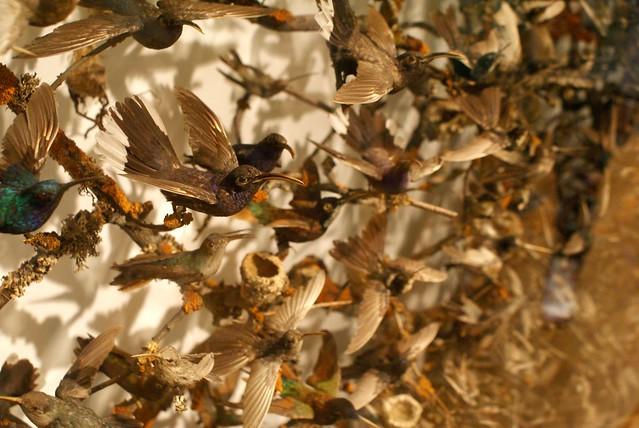 Oiseaux empaillés au musée d'histoire naturelle de Londres, un massacre dont on apprécie étrangement la beauté.