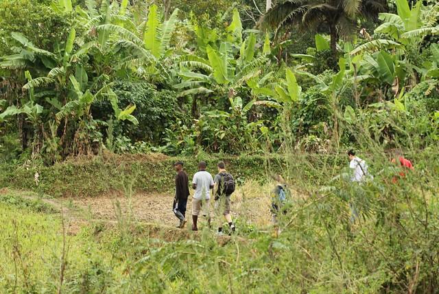 Auf dem Weg zur Vanillepflanzung