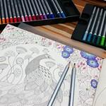 Domingo. #coloringbook #reinoanimal #animalkingdom #milliemarotta #watercolorpencils #staedtler