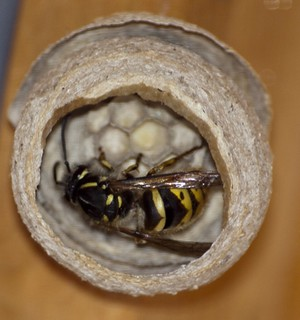 The View of Wasp Nest | by publicdomainphotography