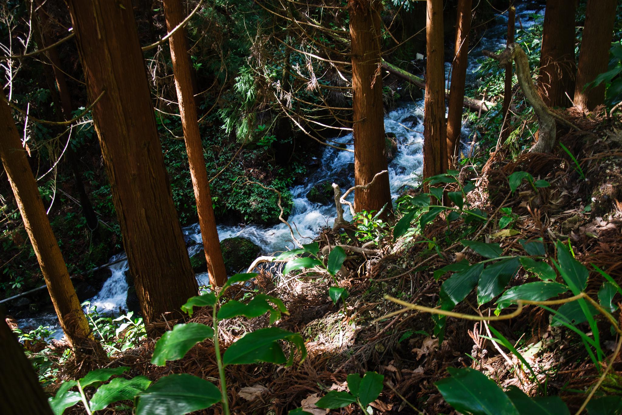 Furnas melletti erdő