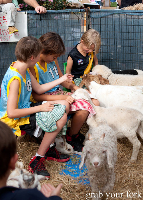 kids feeding baby lambs at the grounds of alexandria markets