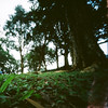 Pinhole Project 365 Day039 - Secret Garden by Zoe.Ho