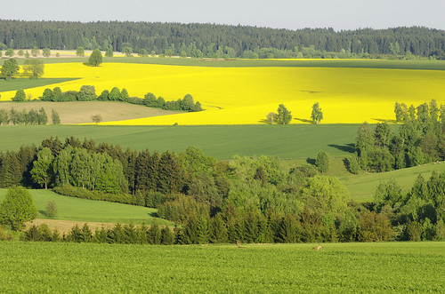 trees light tree green nature field forest landscape spring highlands woods view czech may illumination vista fields czechrepublic greenery overlook viewpoint bohemia forests rolling moravia vysočina cesko česko vysocina vrchovina ceskomoravska czechmoravian českomoravskávrchovina ceskomoravskavrchovina czechmoravianhighlands cibotín cibotin