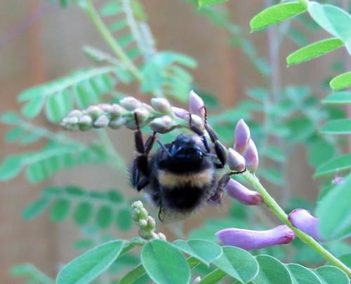 Bee by betameme