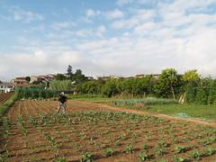L'Horta de Sant Vicenç, creada pel restaurant El Morter, té dues hectàrees de terreny a Sant Vicenç de Torelló.