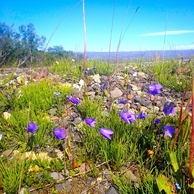Violet #morning #trip #travel #islanda #iceland #flowers