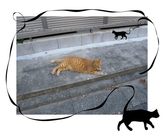 『catzElysium〜古アパートの猫2』の画像