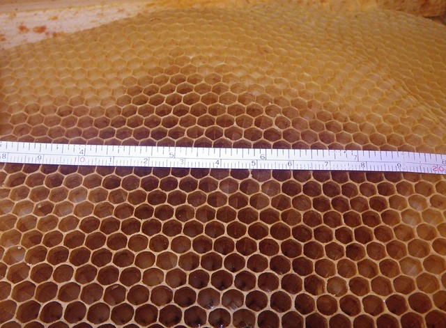 cell size of new comb from colony in 3rd year living on all natural comb