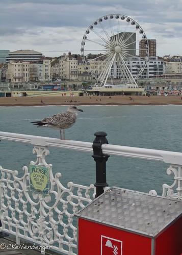 Brighton Pier-3929