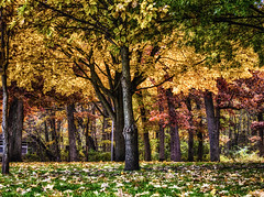 Lowell Park in the Fall