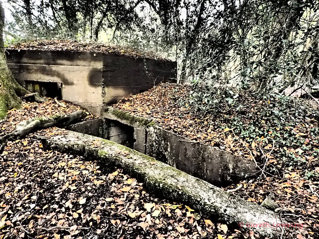 Remains of WWII pill boxes @ Clyne Valley Cou