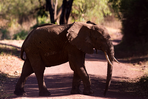 park old lake elephant tanzania national manyara