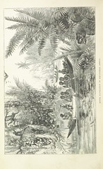 """British Library digitised image from page 266 of """"Explorations and adventures in Equatorial Africa; with accounts of the manners and customs of the people and of the chace of the gorilla, crocodile, leopard, elephant, hippopotamus and other animals. (Seco"""