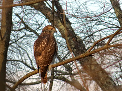 hawk next to parking lot