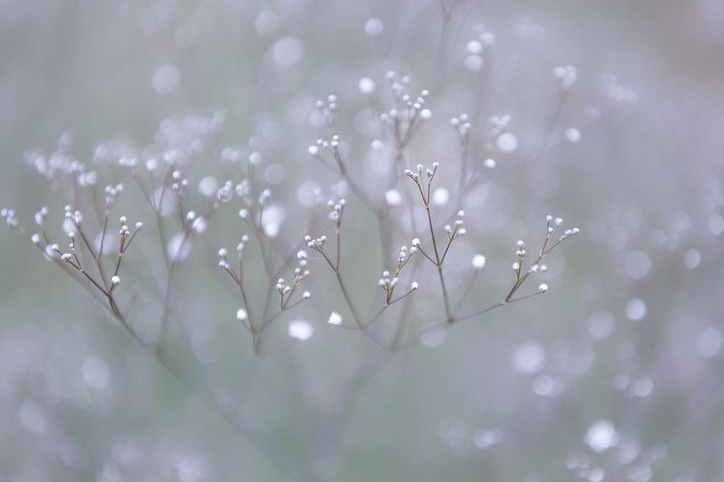 Like Snow