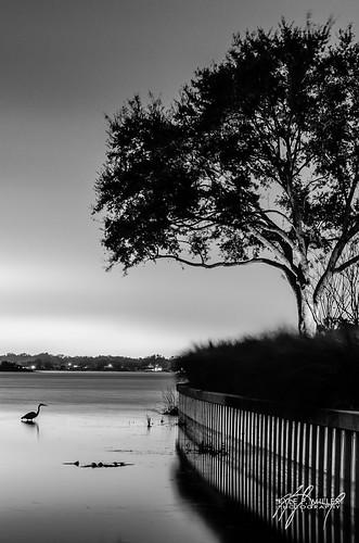 longexposure heron night orlando lowlight unitedstates florida greatblueheron belleisle thephotographyblog