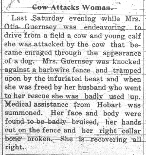 Mad cow attack