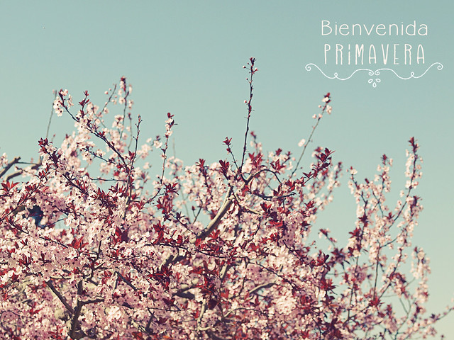 P3090702_1_primavera_1
