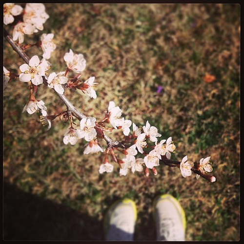 Flowering trees! Yay! (What is it, cherry?) A VERY warm 3 mi today.  #foundwhilerunning