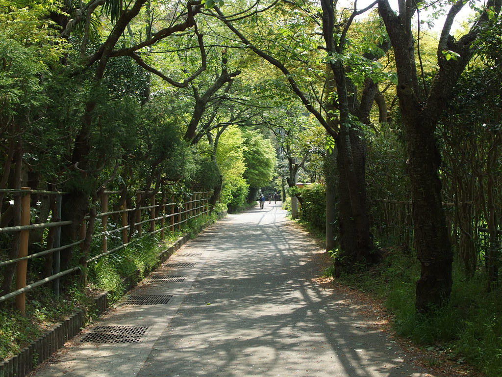 Daibutsu Hiking Trail @ Kamakura