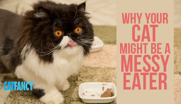 cat-messy-eater