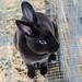 0214 Little Bunny Rabbit