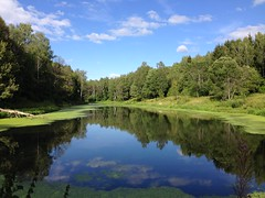 Наше болото