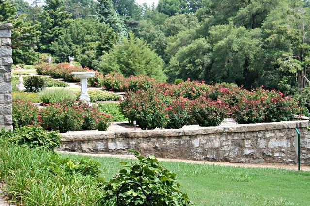roses Italian garden