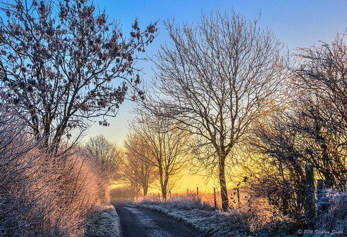 2016 december winter geddington grangeroad northamptonshire eastmidlands england english uk landscape countryside countrylane rural nature natural dawn sunrise sunlight trees ashtrees sycamoretrees hedgerows fence colour earlymorning gold blue warm cool colourcontrast glow peaceful serene tranquil beauty nikon d7200 hdr