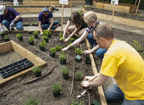 CSU Teams Up With Colorado Rockies and ARAMARK to Create Sustainable Garden