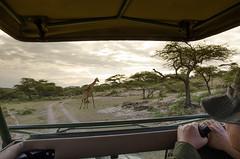 Tanzania-Masek-SafariDrive-32