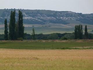 Campos en los que se encuentran los restos de la antigua Pintia