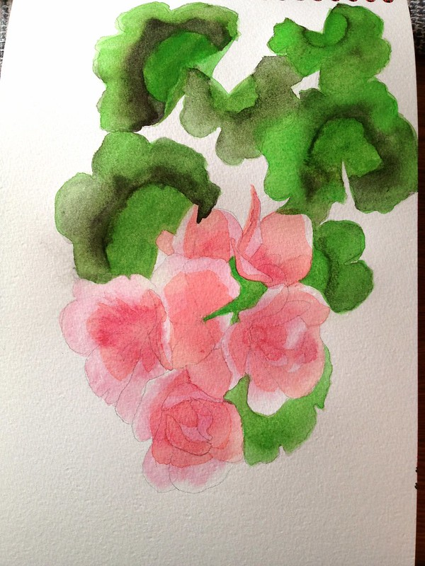 Day 3 - watercolour of geraniums (midway)