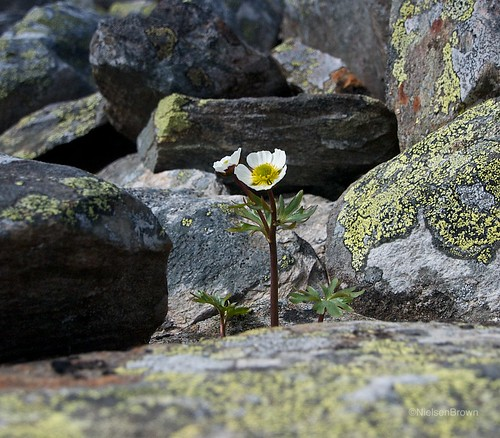 Flower growing in between rocks