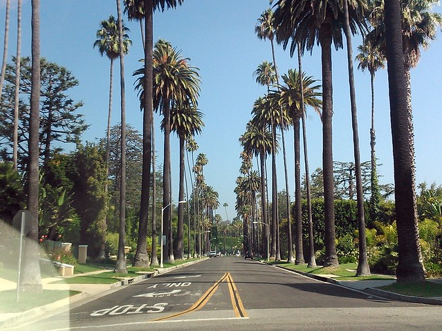 Beverly Hills Palm Lined Street Flickr Photo Sharing