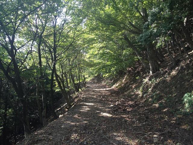 笙ヶ岳 養老公園コース 登山道