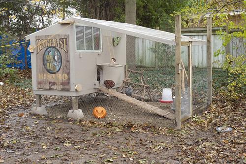 pumpkin-9723