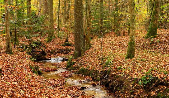 Hidden Streamlet in Autumn Forest, Germany