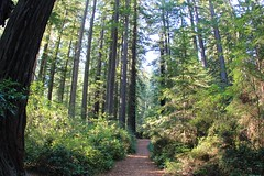 Through the Lady Bird Johnson Grove trail