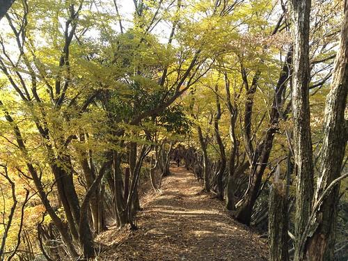 霊仙山 榑ヶ畑コース 登山道 紅葉トンネル