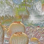 Huntington Desert Garden, California, 2013