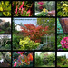 November Garden 2013 by Durley Beachbum