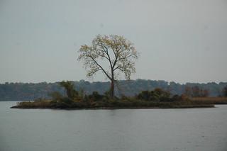 one tree island