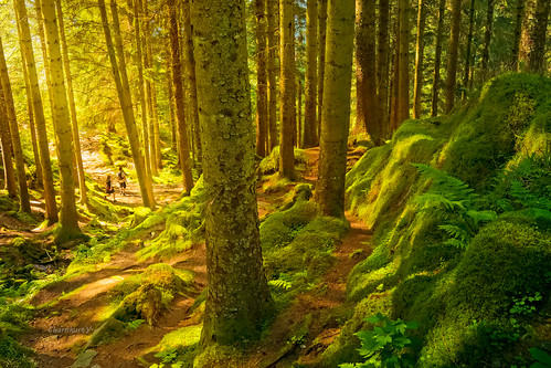 trees summer nature norway forest bergen scandinavia enchanted dxoopticspro radlab canon6d