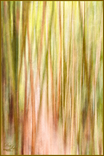Image of a bamboo forest in Hawaii in abstract art