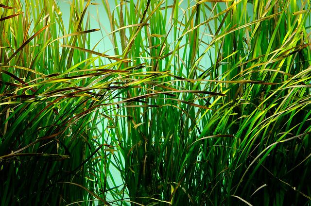 東京湾アマモ場水槽 Tokyo bay seagrass bed tank