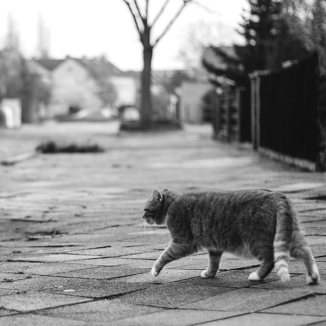[014] Meow!