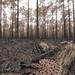 Pigmy Rattlesnake on Prescribed Burn by Mike D. Martin