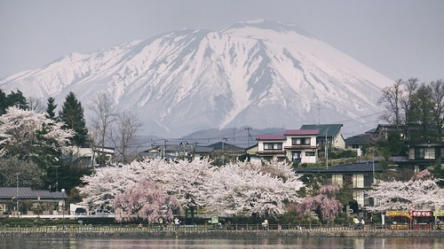 Forever Spring in Iwate